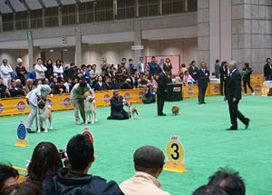 アジアインターナショナルドッグショー