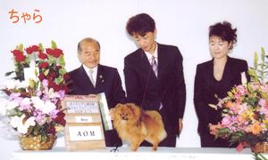 当犬舎の所属する「大阪東ポメラニアンクラブ」